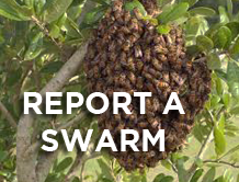 Report a Swarm