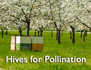 Hives for Pollination